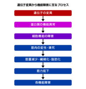 遺伝子変異から機能障害に至るプロセス