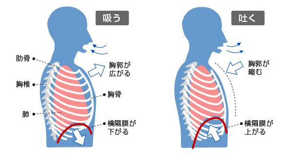 肺を動かす仕組み